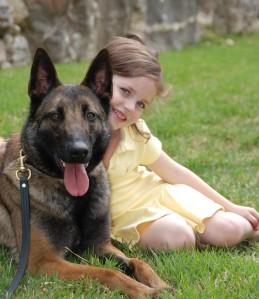 dog companion